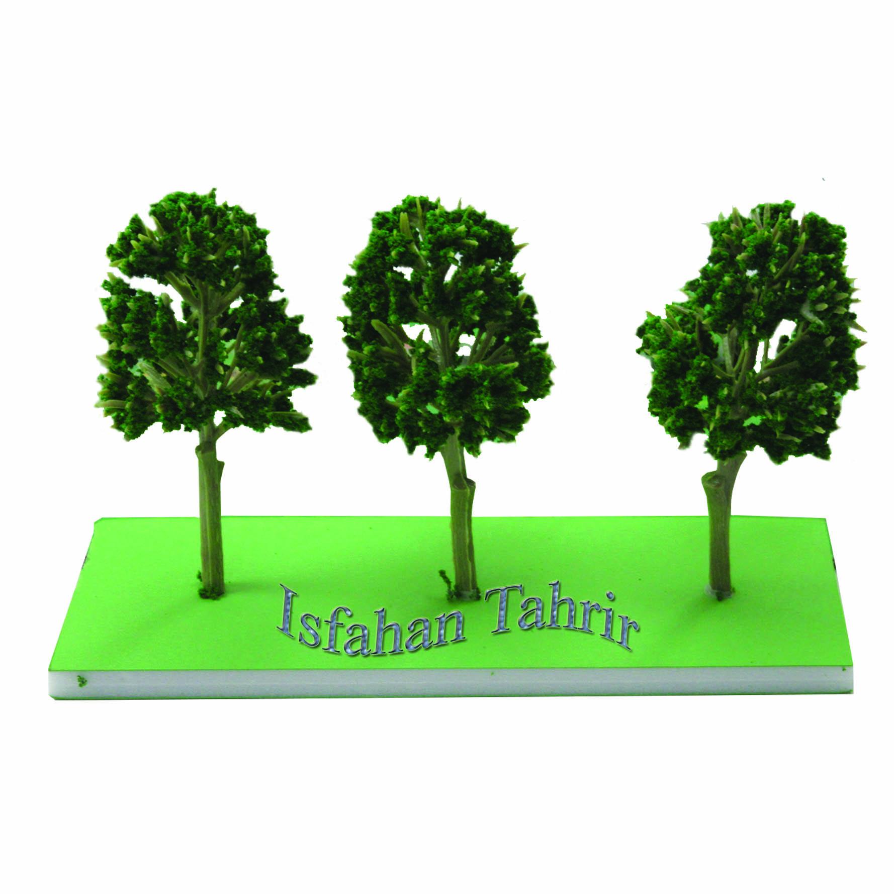 درخت گردو 6.5سانت 3عددی کومه کد117